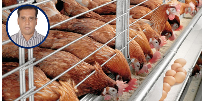 COVID-19 and the future for Bangladesh's poultry sector